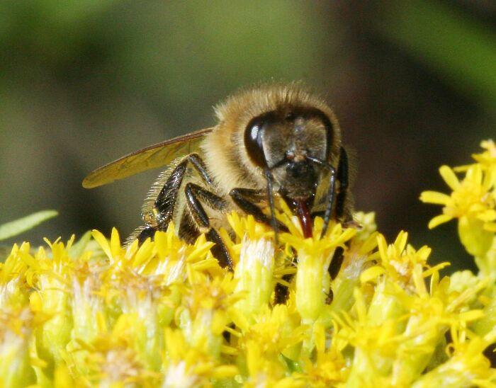 Mật ong rừng , mua bán mật ong rừng , phân biệt mật ong rừng