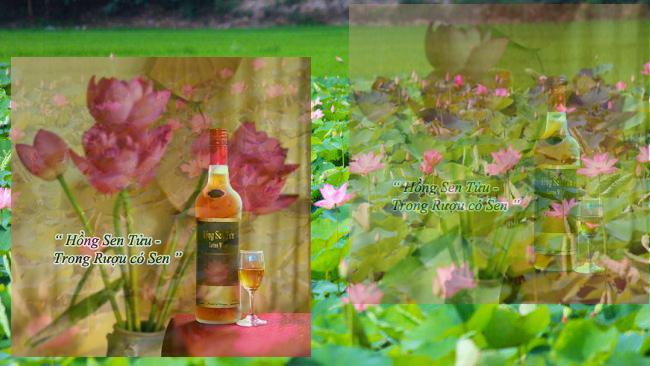 rượu sen tháp mười