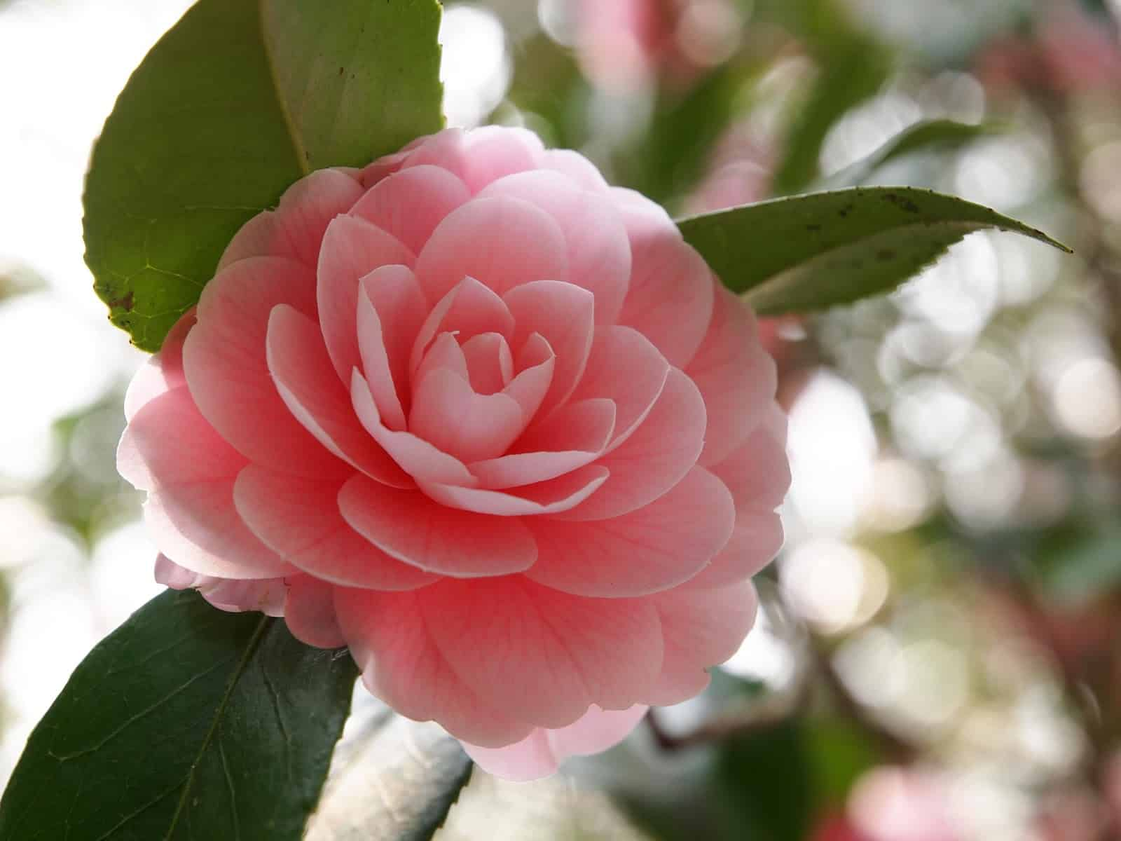 y nghia hoa tra my
